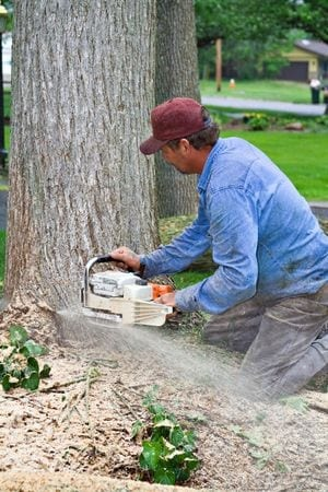 Tools to Help You Remove a Tree