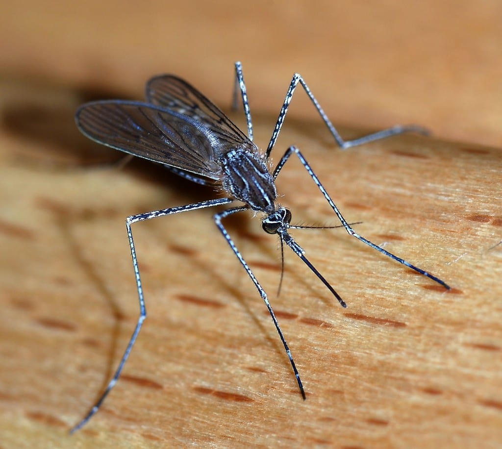 Threats posed by mosquitoes and mosquitoes control methods