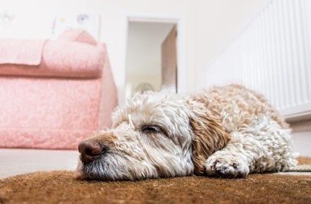 Home Renovation and Pets