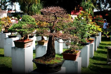 How to Grow and Care for a Bonsai Tree