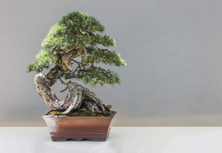 Methods of forming bonsai