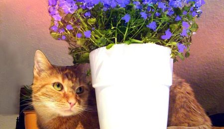 Safeguarding Plants From Cats – How To Keep Cats Out Of Houseplants
