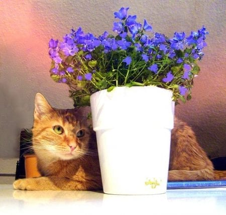 Safeguarding Plants From Cats - How To Keep Cats Out Of Houseplants