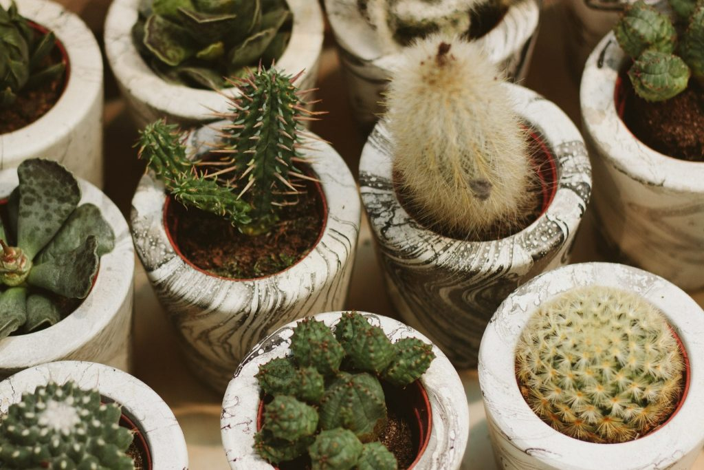 Useful Benefits of Ornamental Plants in Your Home