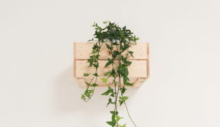 How to Start a Vertical Garden at Your Home