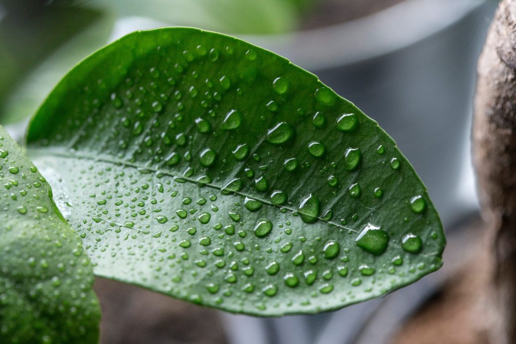 Causes of High Humidity in Your Home & How to Fix It